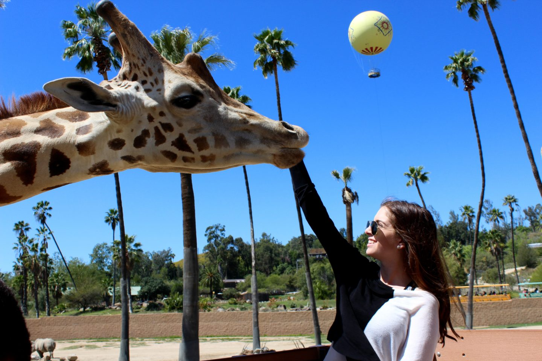 san_diego_safari_park