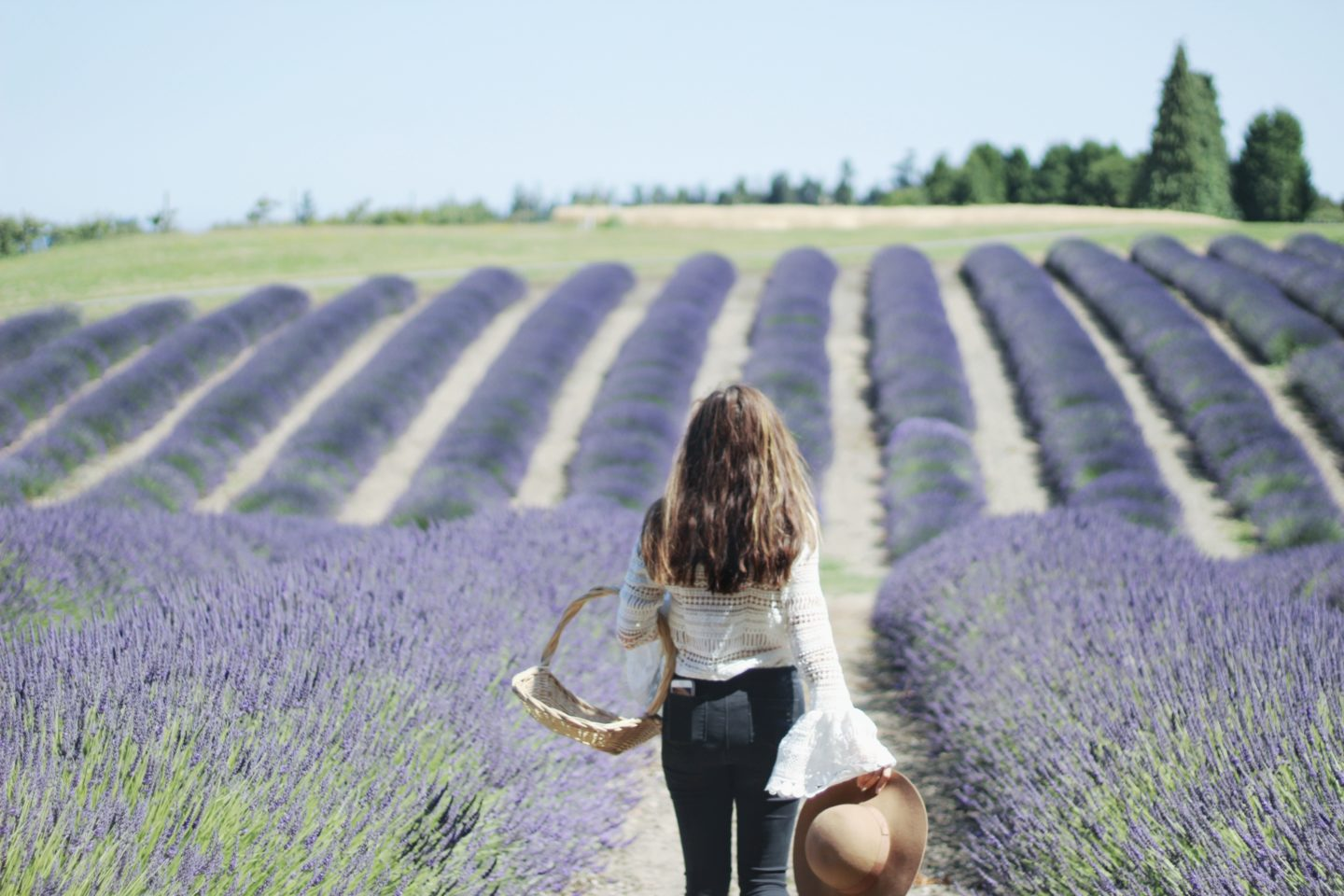 Seattle Summer: Your Guide To Lavender Fields & Berry