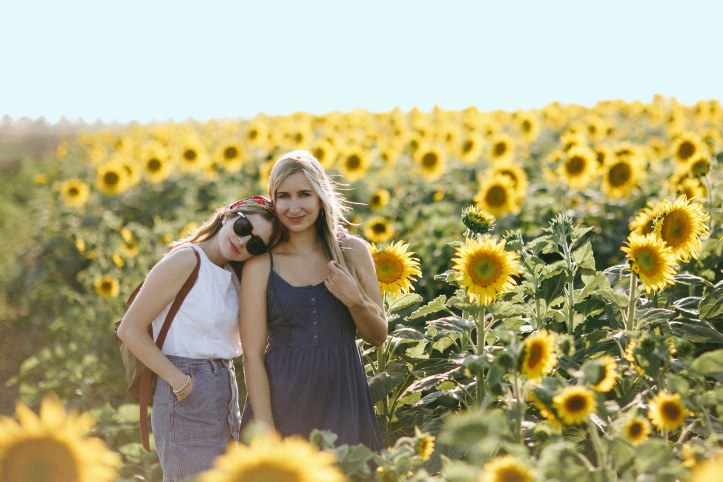 Visiting The Davis Sunflower Fields Summer In The Bay Area