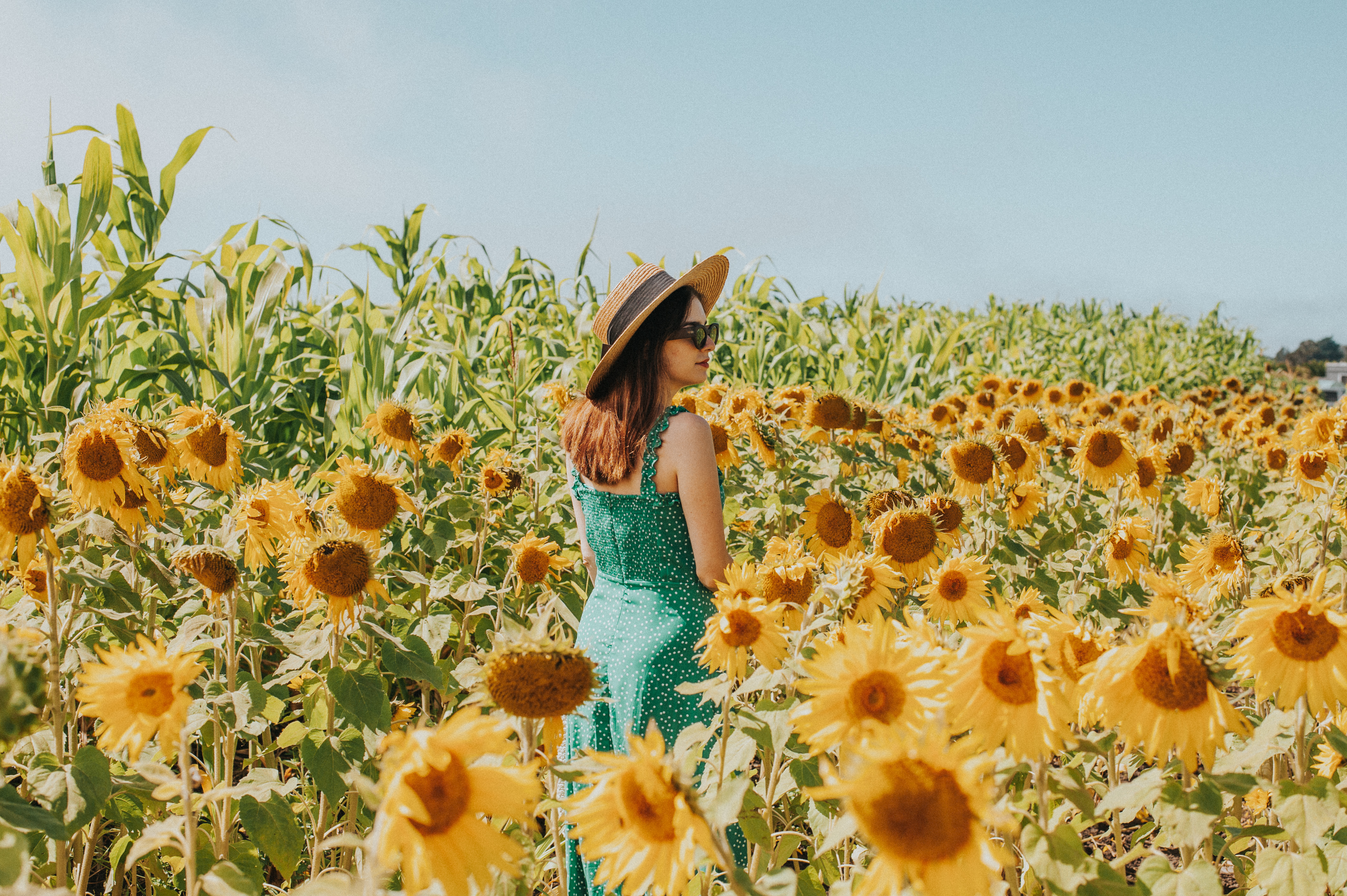 Bay Area Sunflower Fields In Half Moon Bay Bay Area Day Trip